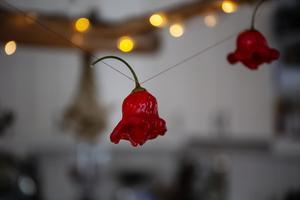 I köket hänger chili-frukter på tork.