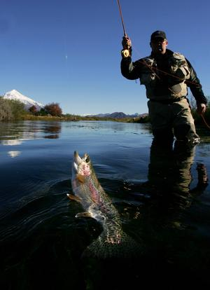 Fiskeklubben Jamtflugan oroas över att sjuka fiskar i kassodlingar ska smitta den vilda fisken.