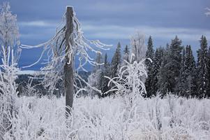 En frostig vinterdag, tagen av Therese Stenman.