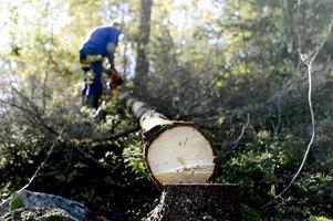 Arbetslösheten i skogen var rekordhög. Foto: Pontus Lundahl/TT/Scanpix