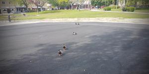 Änder på asfaltsplätten i Vilhelminaparken där det tidigare fanns en damm.