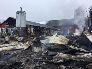 Maskinhallen totalförstördes men ladugården räddades av flera styrkor som bekämpade branden under natten.