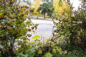 Häcken är sönderskuren så att man enklare ska kunna ta sig in till äppelträden.