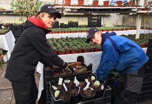 Tvillingarna Edgar (tv) och Vincent Sivenius från Boda, 14 år, praoar hos Barbro. Till vardags går de på Rättviksskolan klass 8 E. De har följt med sin mamma till växthusen och handlat sedan de var små.