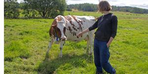Kajsa Petersson med en havande ko. Hon tycker något positivt även kommit ut ur krisen, hur folk sluter upp och hjälps åt.