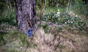 Mot ett av äppelträden ligger en trasig porslinskopp.