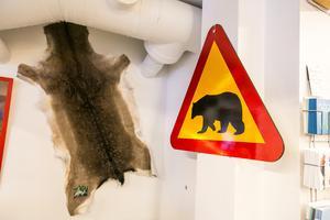 Det är björnrikt i trakterna och Norråker handel säljer bland annat vägskyltar som varnar för björn.