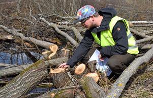Jakob Wallin, biolog, är upprörd då någon avverkat en viktig kommunal skog.