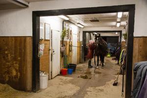 I stallet i Olsbenning hyr hon boxar, men hon har också några hästar hemma på gården.