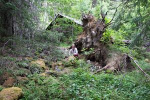 Skogen runt Marija Fischer Odéns hälsingegård bjuder in till att fantasin tar fart. Skogen har inspirerat henne till en fantasytrilogi.