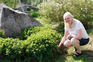 Smmarstället i Stockholms skärgård, hinner de sällan besöka – men, sommargrönskan i Gryttjesbo är rätt ok den också.