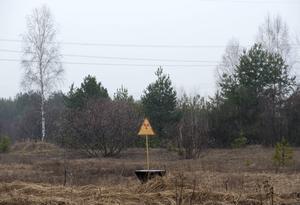Platsen som efter kärnkraftskatastrofen kom att kallas Röda Skogen eftersom träden färgades röda. Händelser i romanen