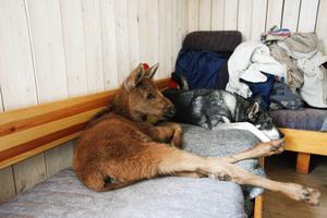 Ruben och Ronja är bästa vänner och vilar ut på soffan.