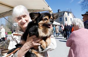 Tim fick åka hundtaxi med matte Ulla Gustavsson från Karlskoga.