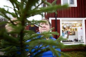 Bergby och Norrsundet bli utan de små julgranarna som varot tradition sedan 90 -talet. Christina Persson ordförande i Hamrånge Företagarförening och ägare av Stinas garn och tygbod.