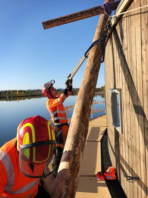 Det är inte ett helt vanligt jobb att montera timmerstockar så att det ska se ut som en timmerbröt från flottningstiden. Bertil Harström ledde arbetet och dokumenterade under tiden. Foto Bertil Harström.