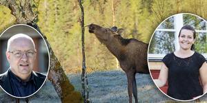 Ulf Berg och Helena Tysk, båda från Jägareförbundet Dalarna, skriver om skogsstyrelsens rapport om minskad älgstam.