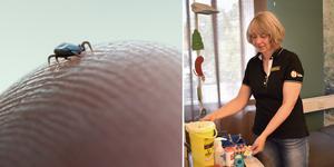 Grundvaccinationen mot TBE består av tre doser där dos två ges en till tre månader efter dos ett, dos tre ges fem till tolv månader efter dos två. Foto: TT och Ellinor Gotby Eriksson