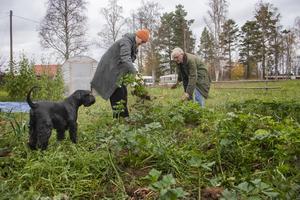 Hunden Lukas inspekterar skörden av purjolök från Lisa Knapes trädgård. Lisa Knape och Erik Söderberg tänker sig att odling ska vara en naturlig del av verksamheten på Spiragården.