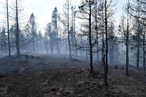Efter fem dygns släckningsarbete krävdes en lång tids bevakning för att inte branden på Jerkersbodberget skulle börja igen.
