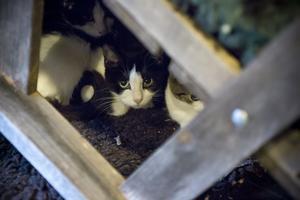 De katter som omhändertogs 2016 placerades på ett katthem i länet.