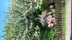 Det här fina ser jag när jag diskar från mitt lilla köksfönster. Grannens fint inredda trädgård. Ser så härligt ut. Välkommen sommaren 2014 :-)