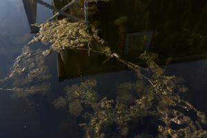 Övergödning är ett problem i många sjöar, vattendrag och havsområden. Det uppstår när ett överskott av  kväve och fosfor, via enskilda avlopp, jordbruk, reningsverk , trafik och industrier, hamnar i havet.