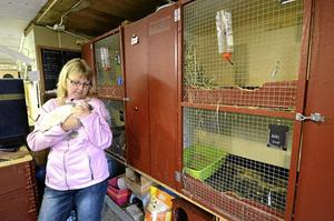 Flera burar är nu tomma hos Maria Lindqvist. Tre kaniner har stulits de senaste veckorna och Maria frågar sig vem som ligger bakom.