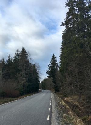 Länsväg 683 genom den till stora delar obebyggda Bovallsskogen, halvannan mil från Ramnäs till Skultuna, binder samman två ådalar och finns med i flera av Lars Gustafssons romaner. Foto: Anders Lif