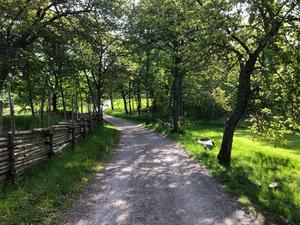 I Illerns naturreservat finns det förutom stigar flera härliga grusvägar att vandra på. Foto: Boo Nordin.