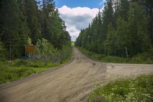 Den svenska glesbygden håller på att dö ut, skriver skribenten.