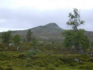 Grövelsjöfjällen vid horisonten. Foto: Privat