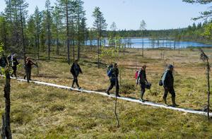 De som anställs för naturnära jobb får bland anat hjälpa til med underhåll i naturreservaten. Foto: Leif Wikberg
