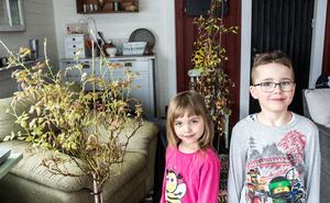 """En vit ros och en rosa bergsklematis har övervintrat i det mörka och svala garaget. """"Det är lite magiskt när det kommer små vita bladknoppar, då får de komma ut i ljuset"""" säger Hanna. Barnen Lisen och Jacob är med och visar."""