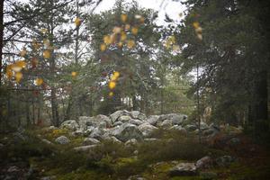 I skogsområdet mellan Fornbacken/Fornhöjden och Östertälje finns detta fornminne som är ett stenröse från bronsåldern.