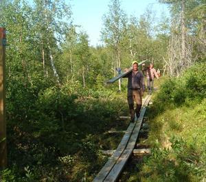 Här kommer en av arbetsgrupperna i Nätra fjällskog med plankor till spänger. Foto: Lena Hedkvist