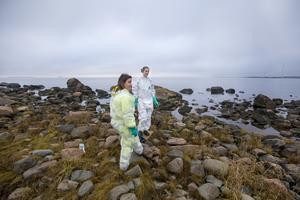 Sofie Östling och Jonna Eriksson bär skyddsdräkter för att slippa komma i kontakt med den klibbiga tallbecksoljan.