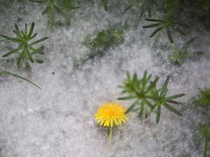 Det ser nästan ut som snö, men beror på värme. På flera platser i landet ser det ut så här på marken.