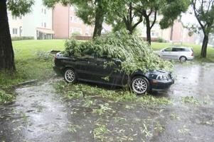 Inte heller stillastående bilar slapp undan när träden vek sig för vinden.