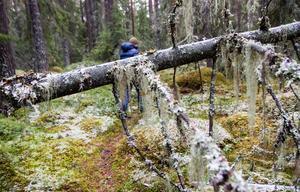 EU:s skogsstrategi är på väg fram.
