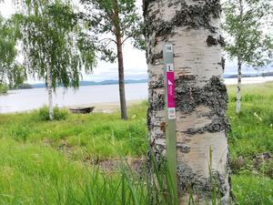 Totalt har 150 checkpoints funnits utplacerade inom ramen för friskvårdsprojektet Hittaut Hudiksvall 2020. Denna plats i Friggesund var en av alla vackra ställen som deltagarna fått besöka.