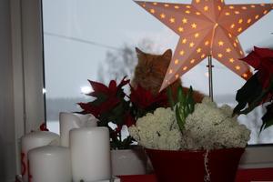 336) Smulan mitt i julmyset. Foto: Ann-Charlotte Olsson