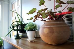 Gröna växter i köket.