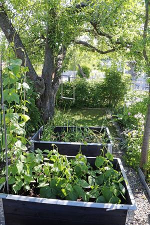 Johanna odlar grönsaker i pallkragar.