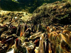 200 000 flodpärlmusslor ska det finnas i ån