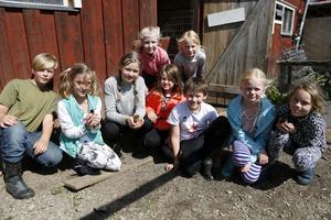 Delar av lägerbesökarna visade hönshuset och de ulliga kycklingar som finns därinne.