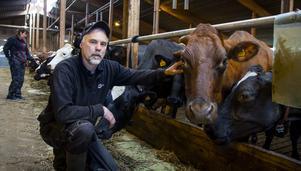 Anneli Svärd och hennes man Mikael Svärd arbetar som mjölkbönder vid Koldemo Lantbruk i Arbrå.