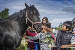 Gårdens största häst stod stilla med Am Punnam klappade på honom.