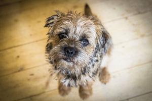 Hunden Kurt trivs på gården i Viskan.