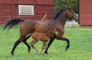 Nyfödd men ack så rapp i benen, fullt upp att hänga med mamma i hagen ;)